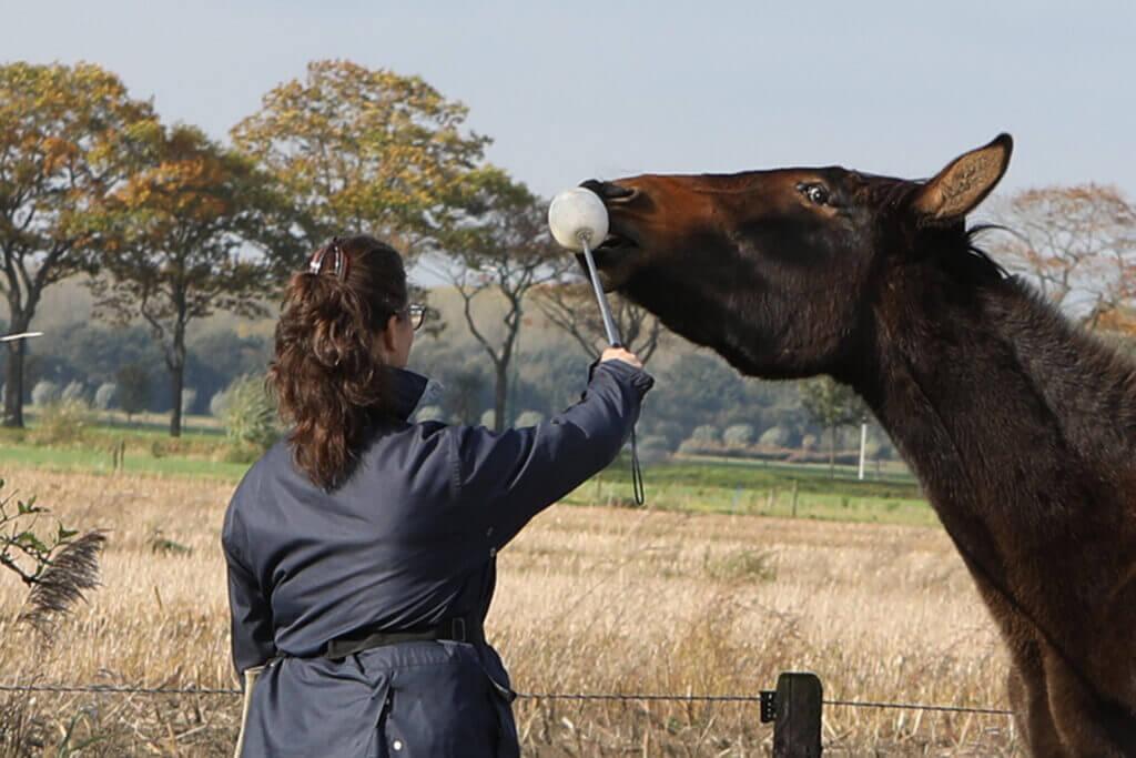 Nadia van Ezellogica traint een ezel met clickertraining